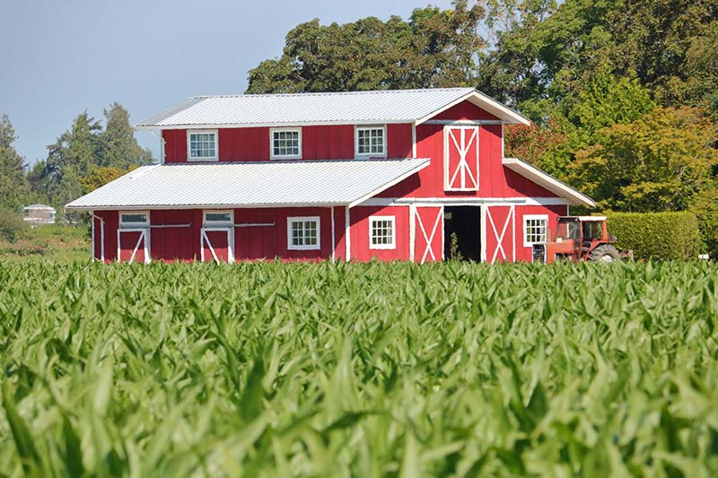 A barn in a cornfield seen while performing detached structure inspection services